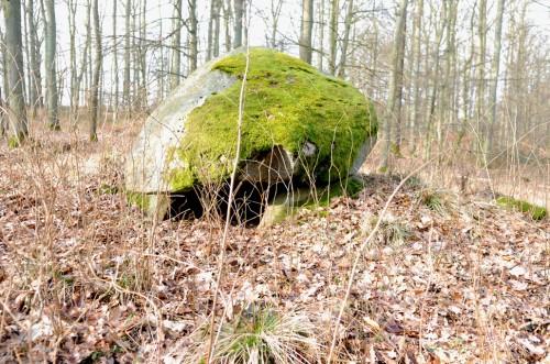 Nyrup Skov Stendysse - ikke langt fra Nyrupvej 49 mod gården Pedersminde